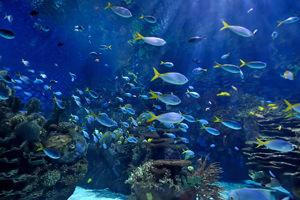 Aquarium. Genoa attraction