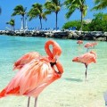 Travel to Aruba