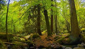 Bavarian wood. Bavaria