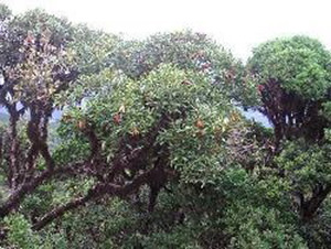 Botanical garden of Sydney