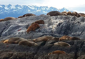 City Ushuaia - nature