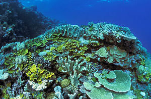 Corals Great Barrier Reef