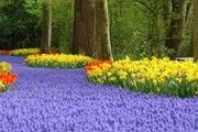 Dutch flower park Keukenhof will open the season March 23