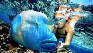 Giftun Island. Resort Hurghada