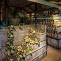 In Italy created a city-museum dedicated to wines
