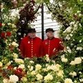 In London, Chelsea will host a flower show