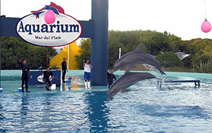 Mar del Plata dolphin shows