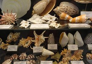 Mar del Plata souvenirs