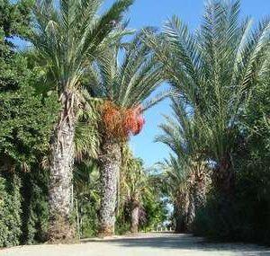 Palma. The resort of Protaras