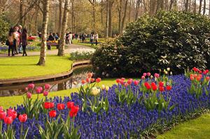 Park Keukenhof, Holland