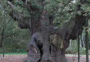 Sherwood Forest, United Kingdom