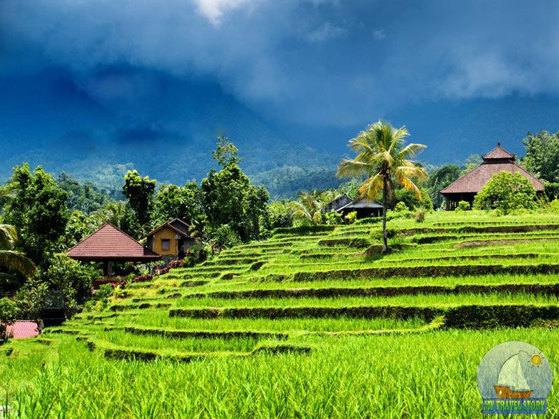 The interesting facts about Bali
