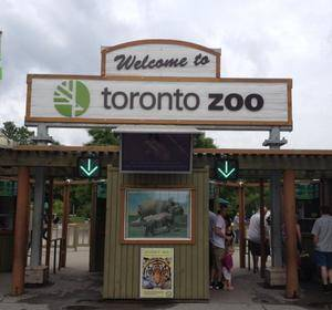 Zoo. Toronto