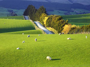 expanses of New Zealand