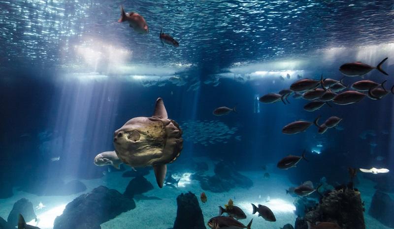 fish sun oceanarium