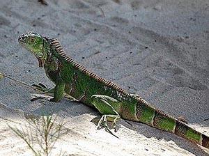 inhabitant of the Cayman Islands