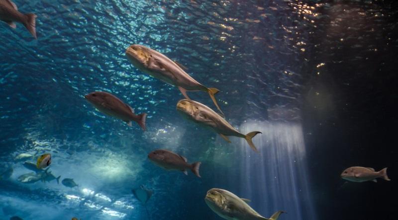 small fish oceanarium