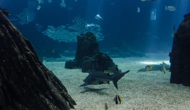small shark oceanarium