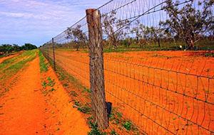 the longest fence